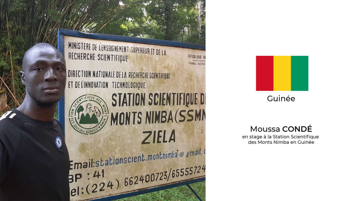 Moussa Condé en stage à la Station Scientifique des Monts Nimba en Guinée